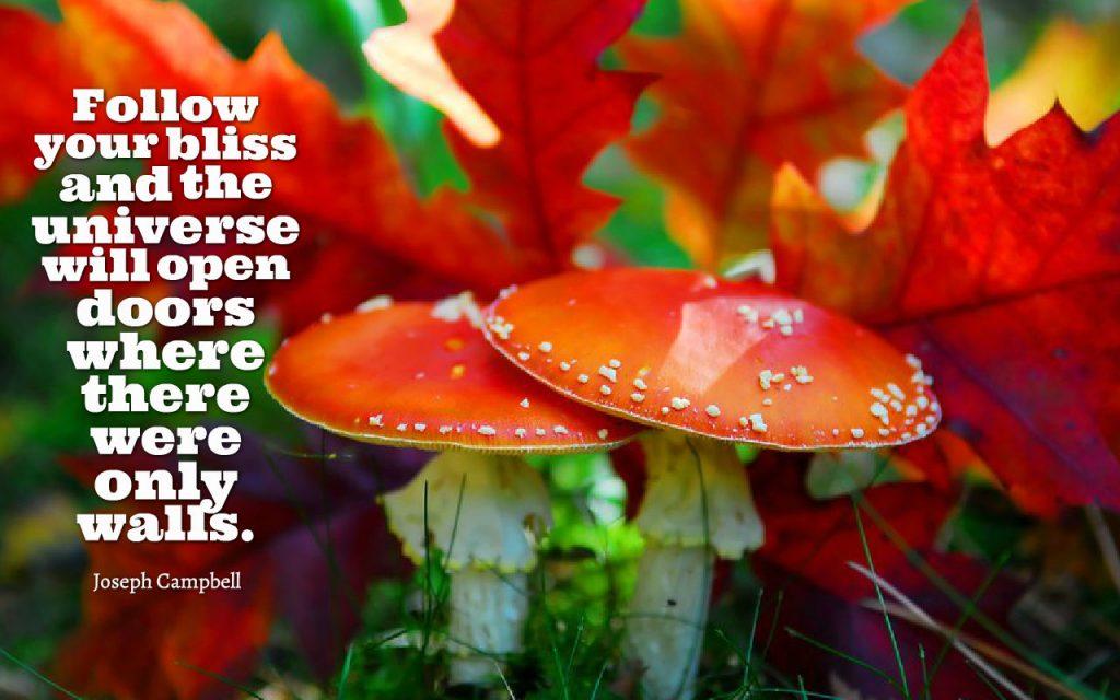 Bliss 3