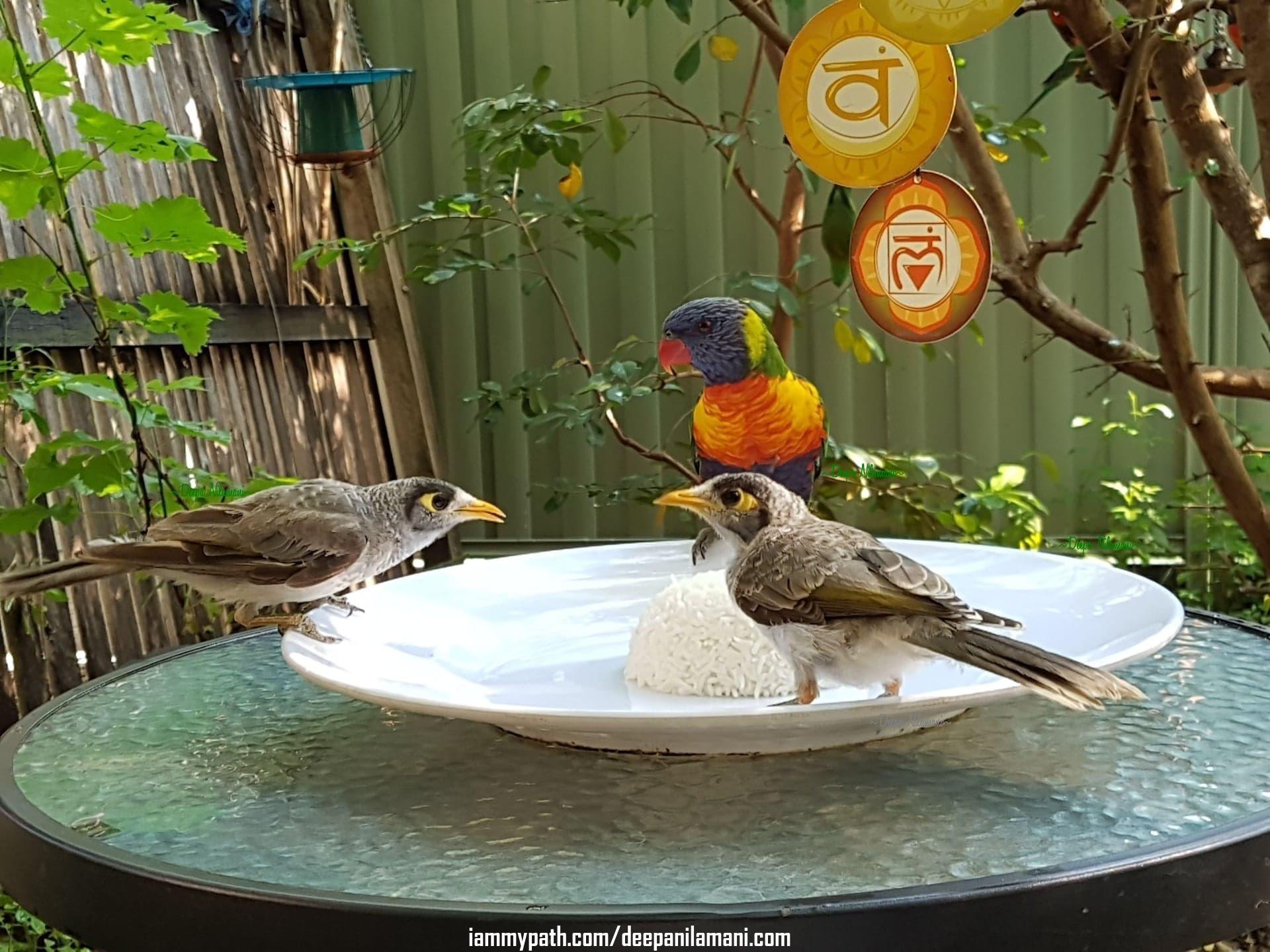Parrot 5